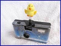 Birdie on Wedding Camera